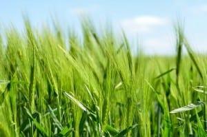 Übersetzungsaagentur für Landwirtschft
